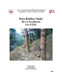 Para Rubber Study  Hevea brasiliensis  Lao P.D.R.