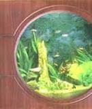 Bể Cá Treo Tường Theo Phong Thủy