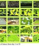 Cornell Controlled  Environment  Agriculture : Hydroponic Lettuce Handbook
