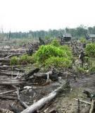 Triển vọng cho thế giới -Cơ chế giảm phá rừng và thoái hóa rừng