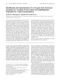 Báo cáo Y học: Identification and characterization of a new gene from Variovorax paradoxus Iso1 encoding N -acyl-D-amino acid amidohydrolase responsible for D-amino acid production