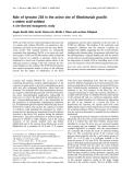 Báo cáo Y học: Role of tyrosine 238 in the active site of Rhodotorula gracilis D-amino acid oxidase A site-directed mutagenesis study