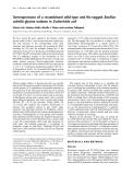 Báo cáo Y học: Overexpression of a recombinant wild-type and His-tagged Bacillus subtilis glycine oxidase in Escherichia coli