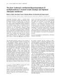 Báo cáo Y học: The plant S-adenosyl-L-methionine:Mg-protoporphyrin IX methyltransferase is located in both envelope and thylakoid chloroplast membranes