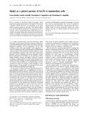 Báo cáo Y học: Mydj2 as a potent partner of hsc70 in mammalian cells