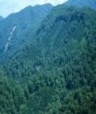 Tài liệu:Công tác điều tra rừng ở VIệt Nam