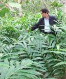 Kỹ thuật trồng 15 loại cây dưới tán rừng