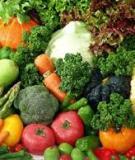 Các loại  cây rau quả
