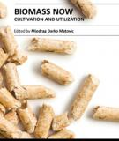 BIOMASS NOW – CULTIVATION AND UTILIZATION