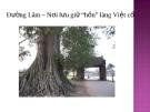 """Đường Lâm – Nơi lưu giữ """"hồn"""" làng Việt cổ"""