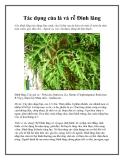 Tác dụng của lá và rễ Đinh lăng