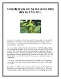 Công dụng của cây Xạ đen và tác dụng điều trị UNG THƯ