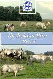 The Belgian Blue  Breed