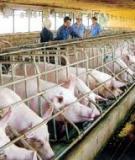 Luận văn:Ứng dụng phương pháp chọn mẫu trong điều tra chăn nuôi
