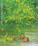 Bông Ðiên Ðiển Màu Vàng