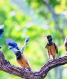 Vì Lòng Nhân Bảo Vệ Chim Non