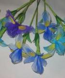 Cách làm hoa Diên Vỹ đủ màu