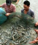 Nghiên cứu hiện trạng khai thác, nuôi trồng thuỷ sản ở Việt Nam  và đề xuất phương pháp xử lý nước thải
