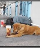 Người Hành Khất Và Con Chó