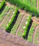 Dự án cải tạo và phục hồi môi trường mỏ đá sét Cúc Đường   Xã Cúc Đường, huyện Võ Nhai, tỉnh Thái Nguyên