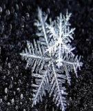 Máu Của Tuyết