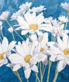 Bông Cúc trắng