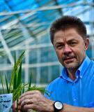 Di truyền phân tử những nguyên tắc chọn giống cây trồng