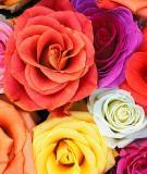 Nêu cảm nhận về mùa xuân trong thơ Hồ Chí Minh