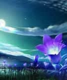 Cảm nghĩ trong đêm thanh tĩnh của nhà thơ Lý Bạc
