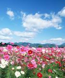 Thơ Lưu Quang Vũ - Gió và tình yêu thổi trên đất nước tôi