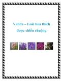 Vanda – Loài hoa thích được chiều chuộng