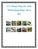 11 ý tưởng trồng cây cảnh 'không đụng hàng' mà ít tiền