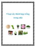9 loại cây thích hợp trồng trong nhà