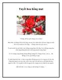 Tuyết hoa hồng mai