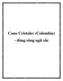 Cano Cristales (Colombia) - dòng sông ngũ sắc