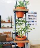 Vườn treo mini cho ngôi nhà thêm sắc xanh