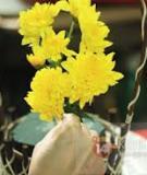 Xem nhanh cách cắm hoa cúc đơn giản