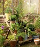 Xu hướng trang trí sân vườn – Phần 2