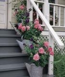 Thềm nhà có hoa