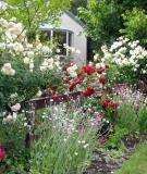 Hàng rào hoa - điểm nhấn lãng mạn cho ngôi nhà