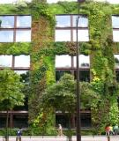 """""""Tuyệt chiêu"""" mát nhà: Trồng vườn lên tường"""