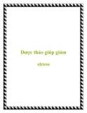 Dược thảo giúp giảm stress