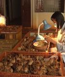 Bài giảng chọn và tạo giống vật nuôi - Lê Thị Lan Phương