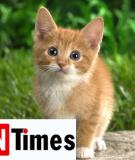 Chú mèo và một đời yêu thương