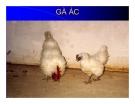 Bài giảng giống vật nuôi - Phần 2