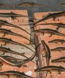 Cẩm nang chăn nuôi rắn mối