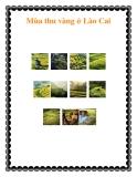 Mùa thu vàng ở Lào Cai