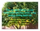 Cây có múi (Citrus) và các hoạt chất sinh học chức năng phòng chống bệnh tật - PGS.TS. Dương Thanh Liêm