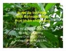Nước ép trái nhào một loại nước uống thực phẩm chức năng - PGS.TS. Dương Thanh Liêm