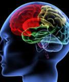 Phương pháp luyện trí não tập 1
